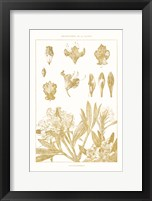 Framed Golden Rhododendron on White
