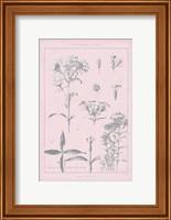 Framed Rose Quartz Phlox