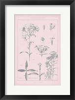 Framed Rose Quartz Phlox