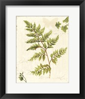 Framed Ivies and Ferns I no Dragonfly