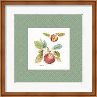 Framed Orchard Bloom IV Border