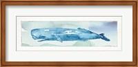 Framed Sea Life V
