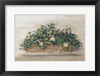 Framed Market Geraniums Crop