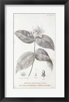 Framed Conversations on Botany VIII