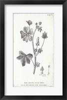Framed Conversations on Botany VII