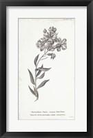 Framed Conversations on Botany VI