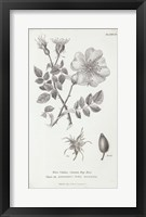 Framed Conversations on Botany IV