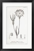 Framed Conversations on Botany III