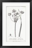 Framed Conversations on Botany II