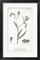 Framed Conversations on Botany I