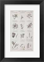Framed Conversations on Botany X