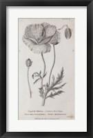 Framed Conversations on Botany V