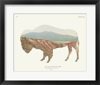 Framed American Southwest Buffalo