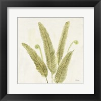 Framed Forest Ferns II v2