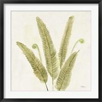 Framed Forest Ferns II v2