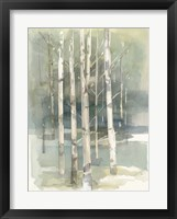 Framed Birch Grove I