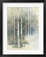 Framed Birch Grove II