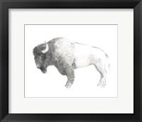 Framed Bison Dark