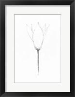Framed Pencil Floral X
