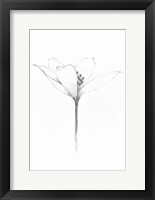 Framed Pencil Floral XI