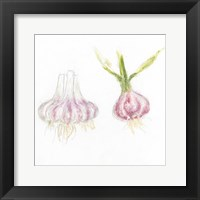 Framed Garden Delight IX