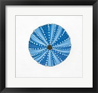 Navy Circular Shell Framed Print