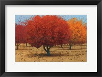 Framed Orange Trees II