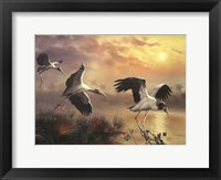 Framed Woodstorks