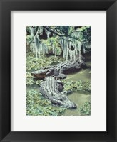 Framed Alligators