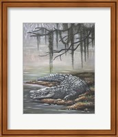 Framed American Crocodile