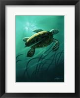 Framed Green Sea Turtle