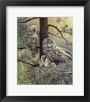 Framed Great Gray Owl  Family