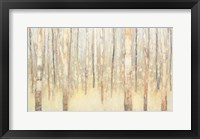 Framed Birches in Winter