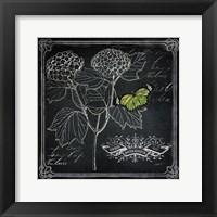 Framed Chalkboard Botanical I