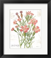 Framed January Dianthus on White
