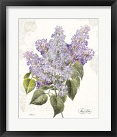 Framed May Lilac on White