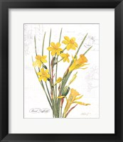 Framed March Daffodil on White