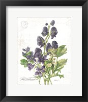 Framed July Delphinium on White