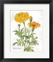 Framed October Marigold on White