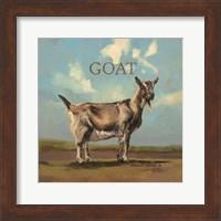 Framed Gracey the Goat