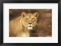 Framed Tribal Lioness