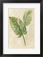 Framed Tropical Leaves Neutral