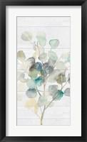 Framed Eucalyptus III on Shiplap Crop