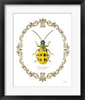 Framed Adorning Coleoptera VII