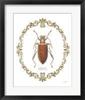 Framed Adorning Coleoptera VI