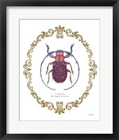 Framed Adorning Coleoptera II