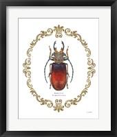 Framed Adorning Coleoptera I