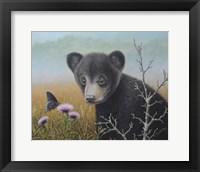 Framed Curious Cub
