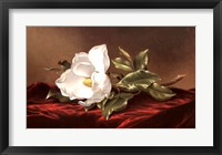 Framed Magnolia Grandiflora