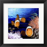 Framed Sea Creatures Clown Fish
